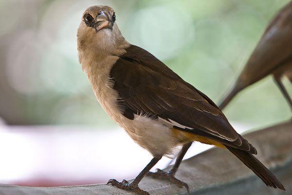 birds-of-tarangire1686DCD8-BED4-D23D-7648-CC45AFC894B8.jpg